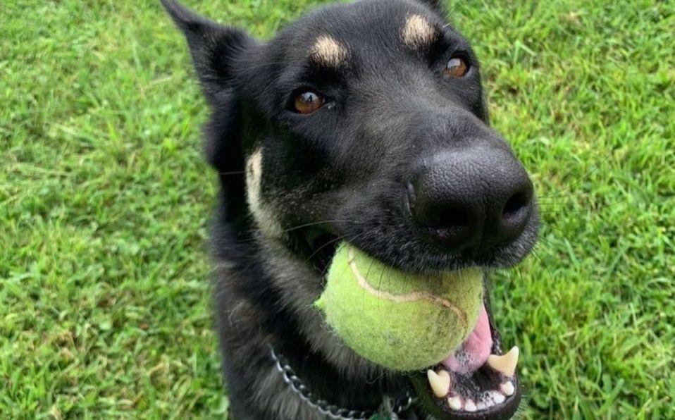 Major, el perro rescatado de Joe Bien que vivirá en la Casa Blanca (Foto: Instagram)