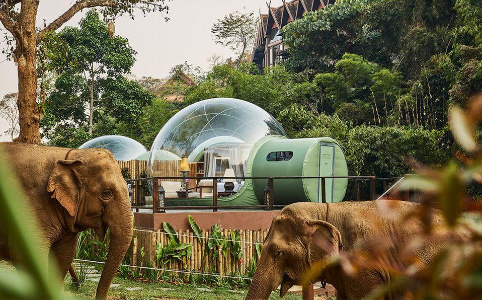 Jungle Bubbles es la nueva e increíble forma de hospedarte entre la naturaleza.