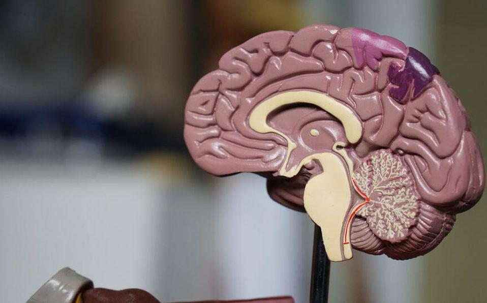 Esclerosis Múltiple: ¿Qué es y cuáles son los síntomas? (Foto: Unsplash)