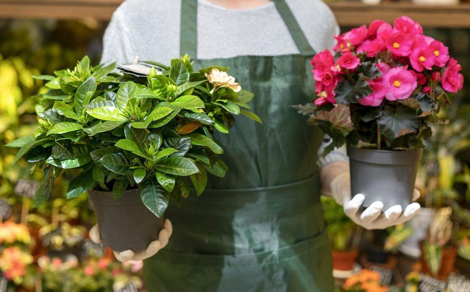 Las plantas pueden traer beneficios a tu vida. Foto: Archivo