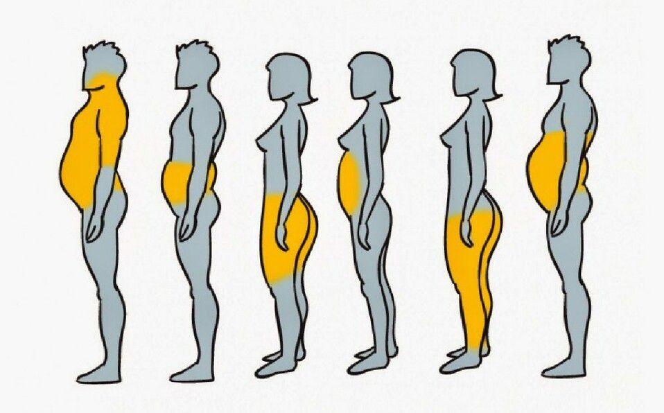 La distribución de la grasa corporal está determinada en gran medida por factores hormonales.