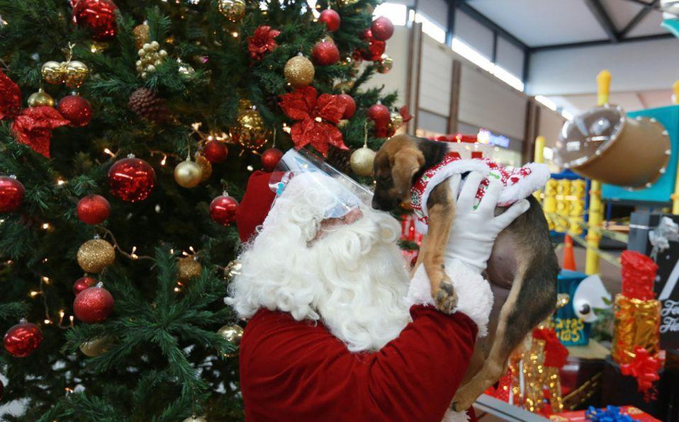 Patio Toluca inauguró la Navidad con su encendido del árbol