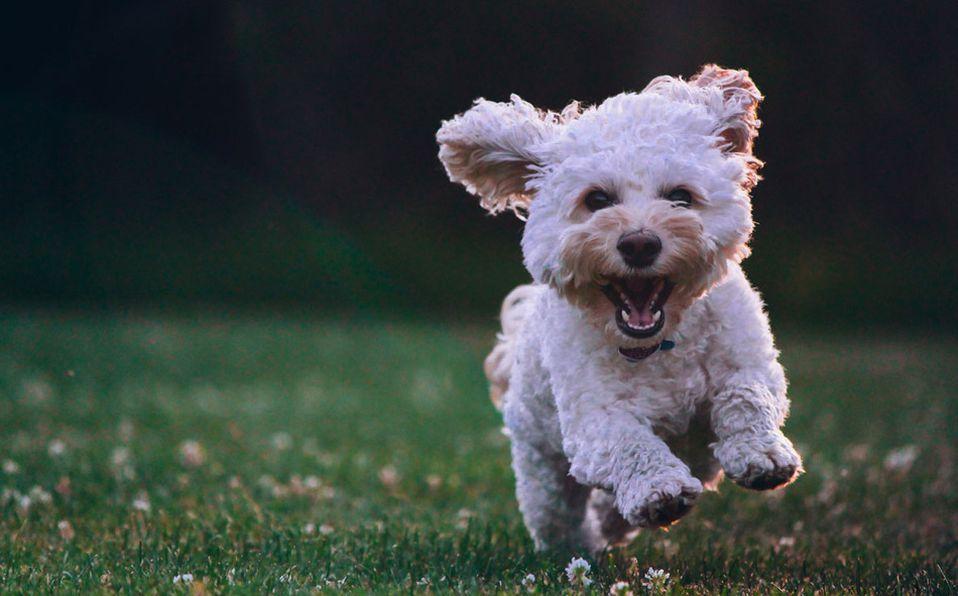 Descubre los mejores accesorios para nuestras mascotas / Foto: Cortesía