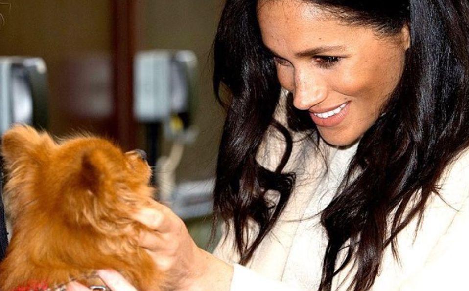 Meghan Markle ha ayudado a animalitos en secreto durante la pandemia (Foto: Instagram @sussexroyal)