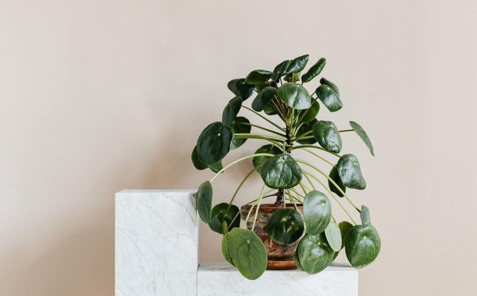 Plantas de interiores, fáciles de cuidar que absorben el calor (Foto: Pexels)