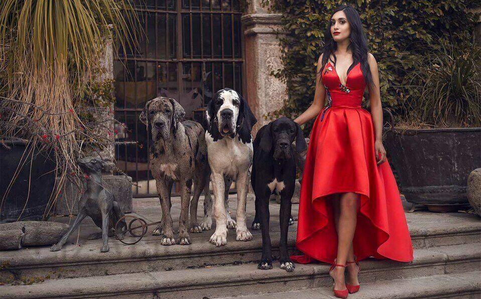 Una apasionada de los animales, conoce a Artemis, Minos y Aries, sus Grandes Daneses.