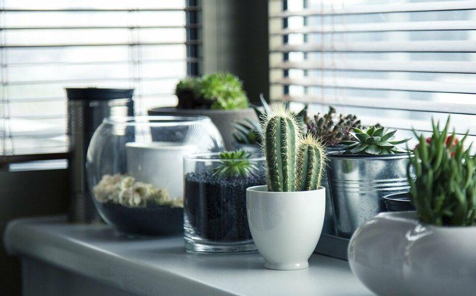 Plantas en casa / Foto: Pixabay
