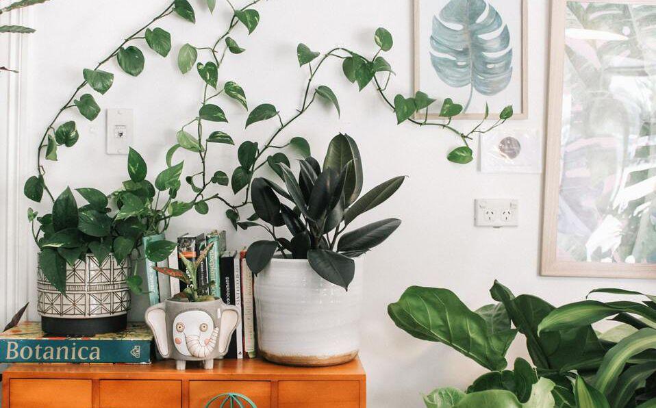 Cómo cuidar tus plantas: Tips y guía básica (Foto: Unsplash)