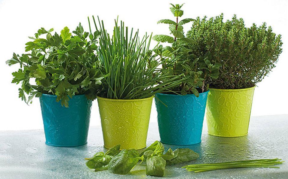 Descubre cuáles son las plantas repelentes de mosquitos ideales para tu hogar (Foto: Cortesía)