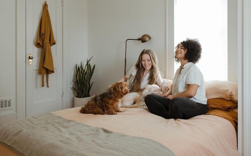 Adapta el diseño de tu casa para tu mascota sin perder el estilo