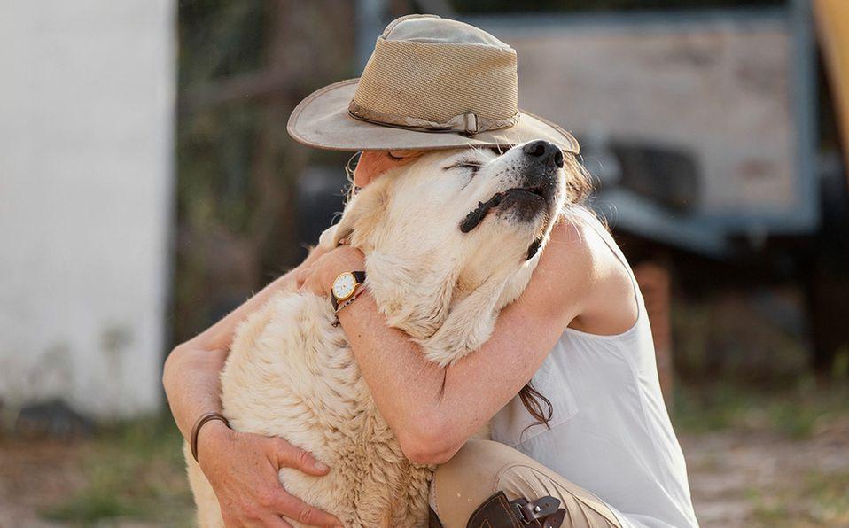 Refuerza el vínculo que tienes con tu perro para evitar futuras conductas negativas. Foto: Archivo