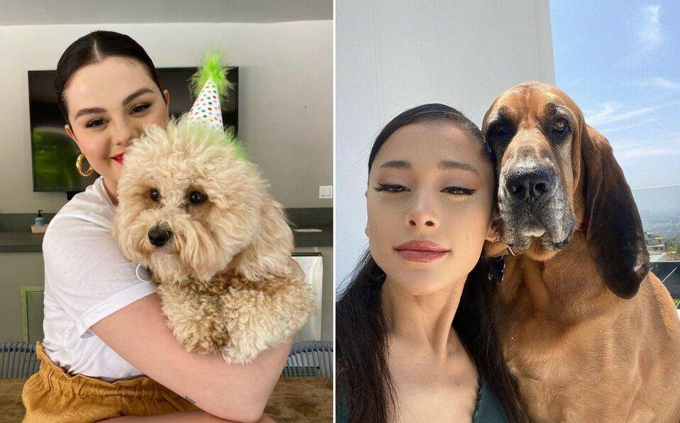 Famosos que han adoptado perros de la calle y ahora son sus mascotas