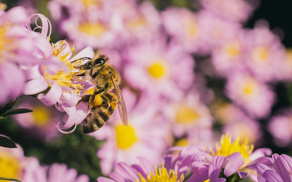 Casi el 90% de las plantas con flores dependen de la polinización para reproducirse. Foto: Archivo